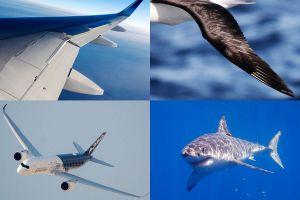 Airbus will für Flugzeuge mehr von der Natur lernen
