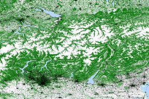 Radarauge aus dem All erkennt Waldzustand